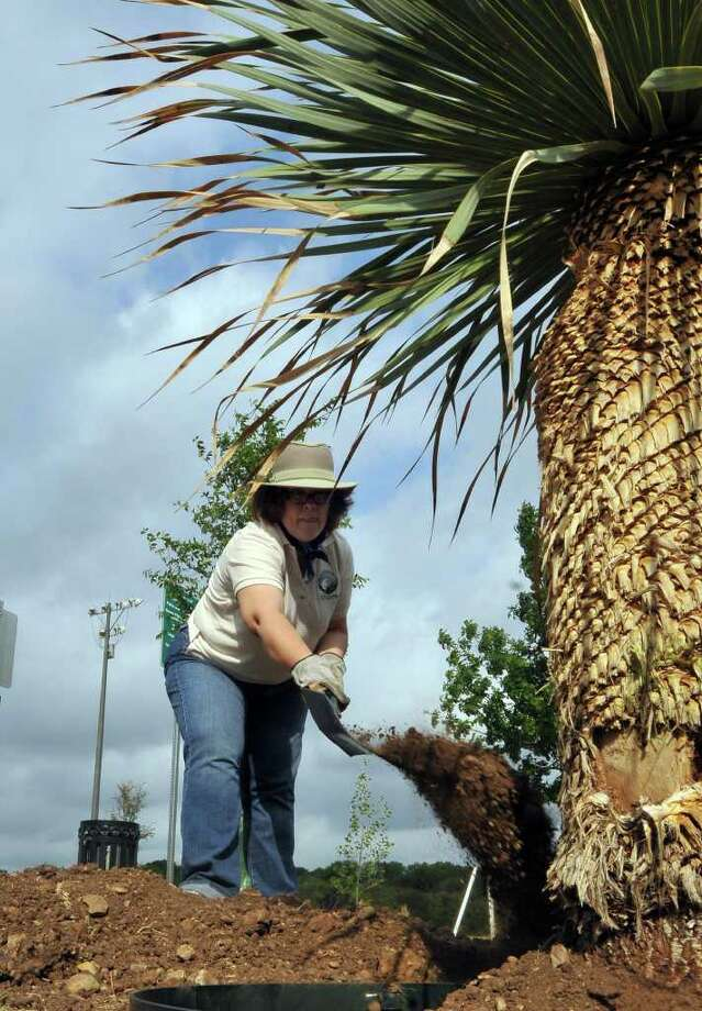 Sharon Jones, a volunteer from the Army Installation Military Command, helps plant a yucca tree during Earth Day Ceremonies. Photo: Robin Jerstad/Special To The Express-News / Copyright 2011 by Robin Jerstad 210-254-6552