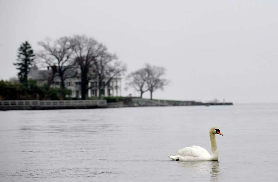 A swan swims in Byram Harbor, Saturday afternoon, April 23, 2011.  In the background at left is the mansion of hedge fund billionaire Paul Tudor Jones II.  The mansion overlooks the harbor and Long Island Sound. Photo: Bob Luckey / Greenwich Time