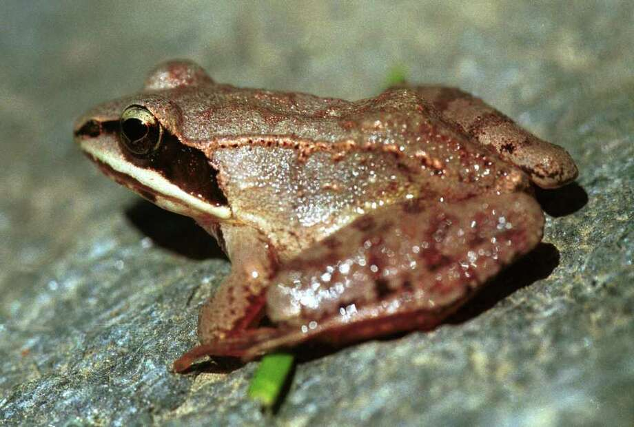 Amphibian Amble at Stamford museum & Nature CenterGrab your flashlights and hiking boots Friday night, and discover some of the unique creatures that visit vernal pools once a year to lay their eggs like wood frogs, American toads, and spotted salamanders. Find out more.