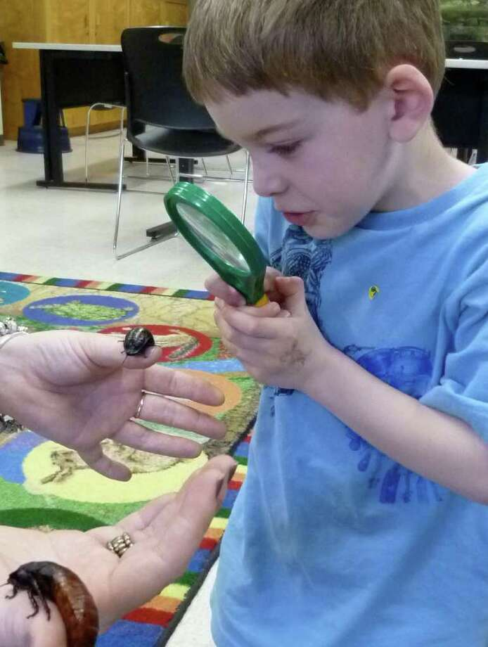 Ian McLenahan, 4, studies a Madagascar hissing cockroachTuesday at an insects program for yongsters Tuesady at Earthplace in Westport. Photo: Contributed Photo/Mike Lauterborn / Westport News contributed