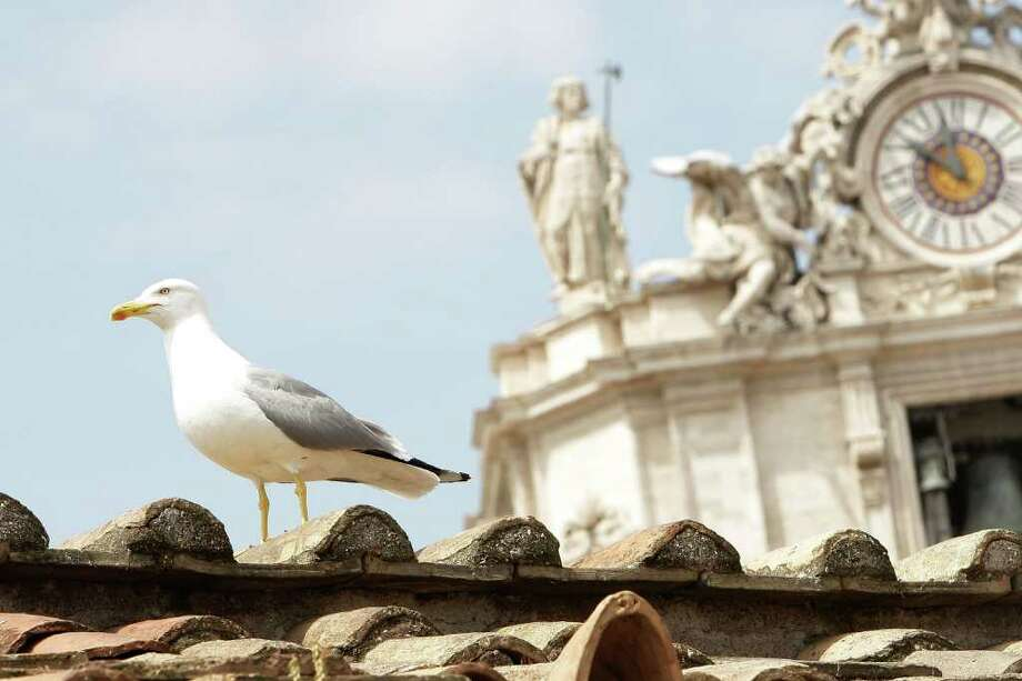 A gull stands on the roof of the colonnade of St. Peter's Basilica during Easter Mass held by Pope Benedict XVI in Vatican City, Vatican. Photo: Getty Images