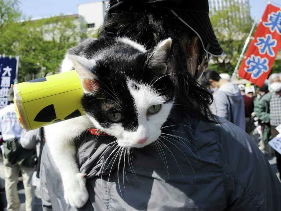 "A cat named ""En En"" is held by an attendee at an anti-nuclear power plant rally and protest march in Tokyo. Photo: AFP/Getty Images"