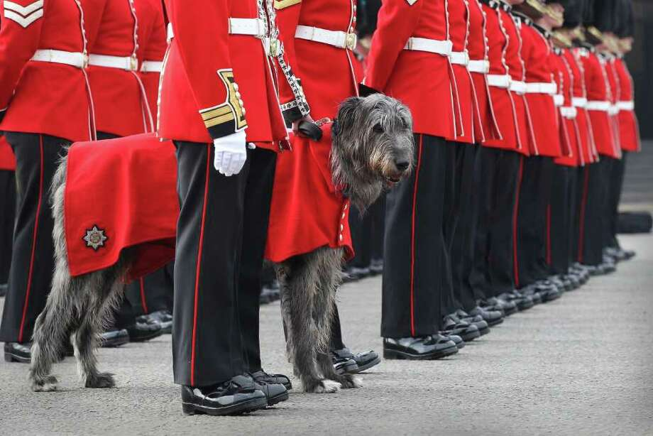 Members of the Irish Guards stand with Conmael an Irish Wolfhound and Regimental Mascot during an inspection at Victoria Barracks in London, England.  Photo: Getty Images