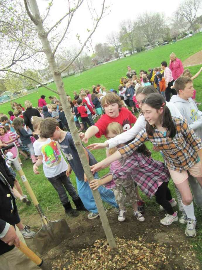 "Roger Sherman Elementary School students touch an Elm tree Thursday afternoon following a tree planting at the rear of the property. Fairfield was also recognized as a ""Tree City USA"" for the 23rd year. Photo: Kirk Lang / Fairfield Citizen"