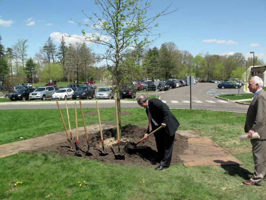 Principal Tony Pavia cements the tree planted in his honor in front of New Canaan High School. Photo: Contributed Photo / New Canaan News