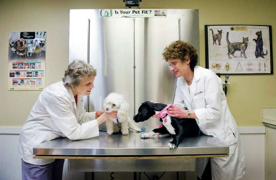 Dr. Janet Triplett and Dr. Nancy Maloney are joined in an exam room by 'Annie', a toy poodle mix, and 'Emi', a border collie mix, at the Norwalk Animal Hospital and Dental Clinic in Norwalk, Conn. on Friday April 29, 2011. Photo: Kathleen O'Rourke / Stamford Advocate