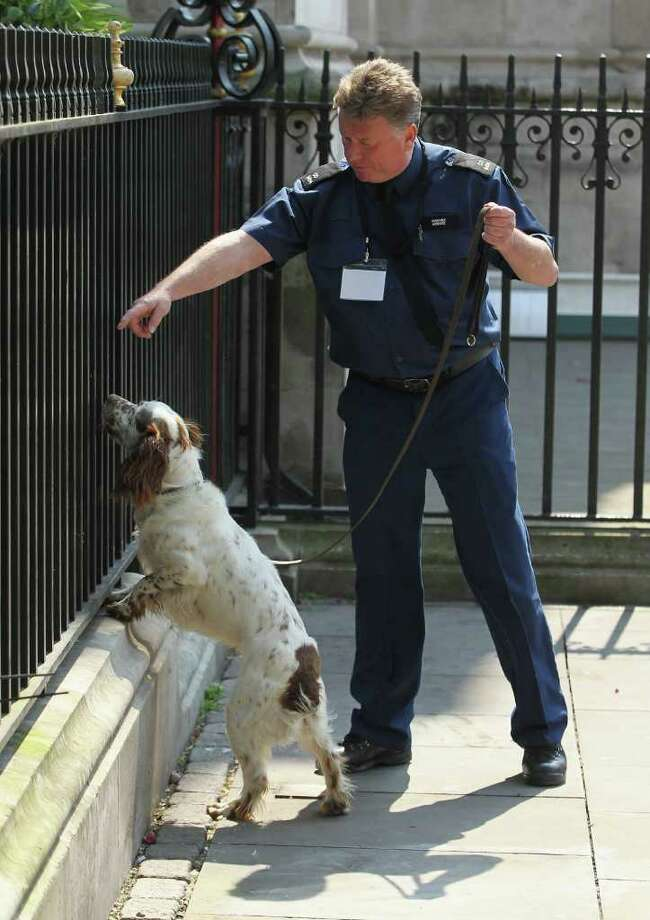 A policeman directs Wiggles the sniffer dog next to Westminster Abbey on April 28, 2011, the day before Prince William and Kate Middleton married there. in London, England. Photo: Getty Images