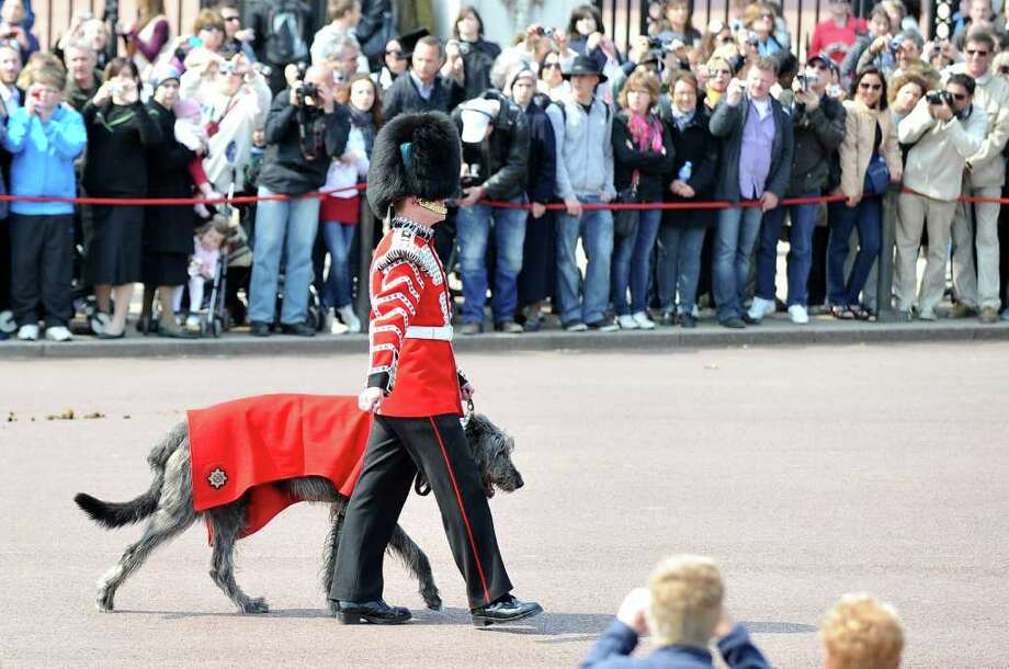 A member of the household brigade marches with a dog in front of Buckingham palace, in London, on April 28, 2011.  Photo: AFP/Getty Images