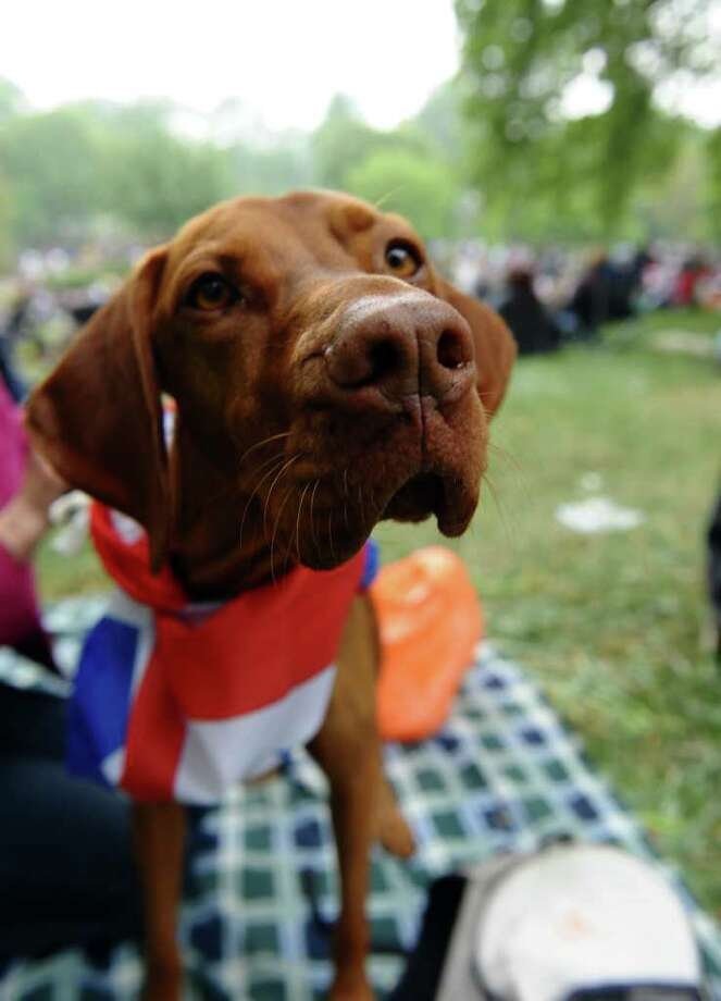 A dog wears a British Union Jack scarf on the day of the royal wedding of Britain's Prince William and Kate, Duchess of Cambridge, in central London, on April 29, 2011. Photo: AFP/Getty Images
