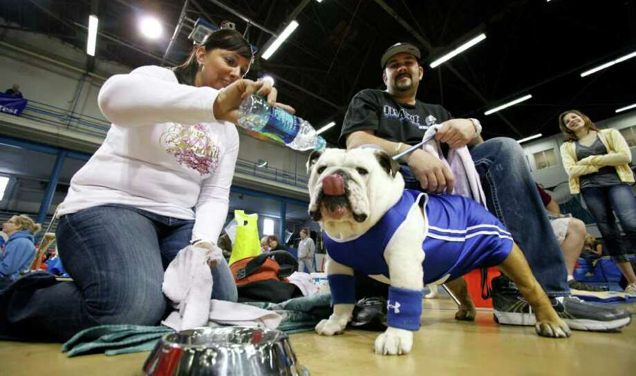 Tiffany and Damon McLeod, of Pleasant Hill, Iowa, give their dog Ace a drink of water during the 32nd annual Drake Relays Beautiful Bulldog Contest Monday, April 25, 2011, in Des Moines, Iowa. The pageant kicks off the Drake Relays festivities at Drake University where a bulldog is the mascot. Photo: AP