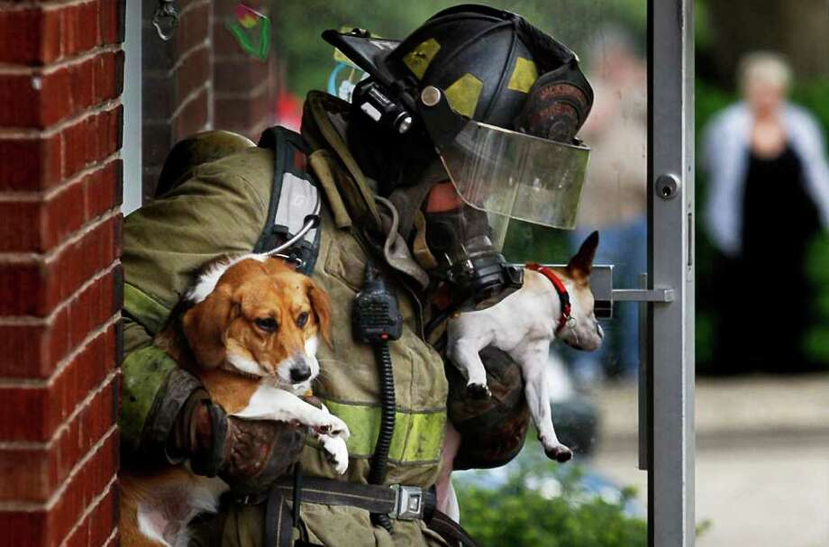 In this photo taken Tuesday, April 26, 2011, Jacksonville, Ill., firefighter Andy Bell carries two dogs, Parley, left,  and Nellie, that were rescued from an apartment fire in Jacksonville. Both dogs survived, and Nellie was given oxygen before being returned to her owner. There were no injuries reported from the fire. Photo: AP