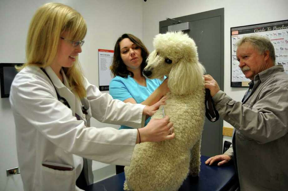 This Wednesday, April 26, 2011 photo courtesy of Stephanie Specchio  for the College of Veterinary Medicine at Cornell University shows Cornell student Kerry Ryan, class of 2012, left, as she checks Dempsey, a standard poodle, for fleas while his owner, Hugh Ink, right, and veterinary technician Jennifer VanAlstine help to hold Dempsey on an exam table at the school in Ithaca, N.Y. Photo: AP