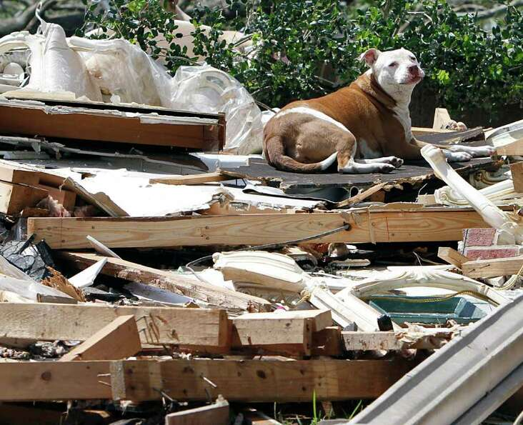 A dog sits on what is left of a home after a tornado hits Pleasant Grove just west of downtown Birmi