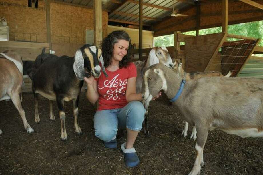 """JERRY BAKER: FOR THE CHRONICLE IN THE BARN: """"Gloxina"""", from left, """"Pepsi,"""" and """"Dublin"""" get some special attention from Michelle Gasaway, co-owner of Mia Bella Farm in New Caney. Photo: Jerry Baker, For The Chronicle"""