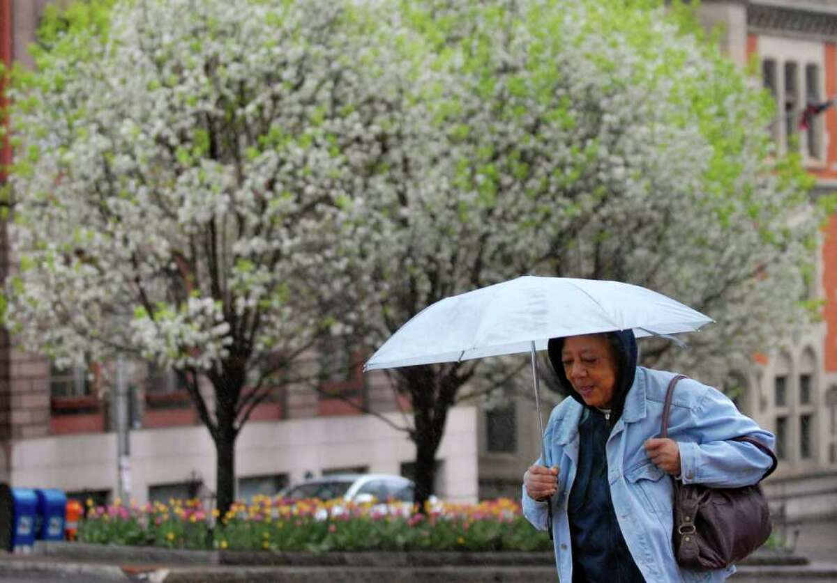 Gloria Giles of Hudson protects herself from the spring rain as she walks up State Street on Wednesday, May 4, 2011, in Albany. (Cindy Schultz / Times Union)