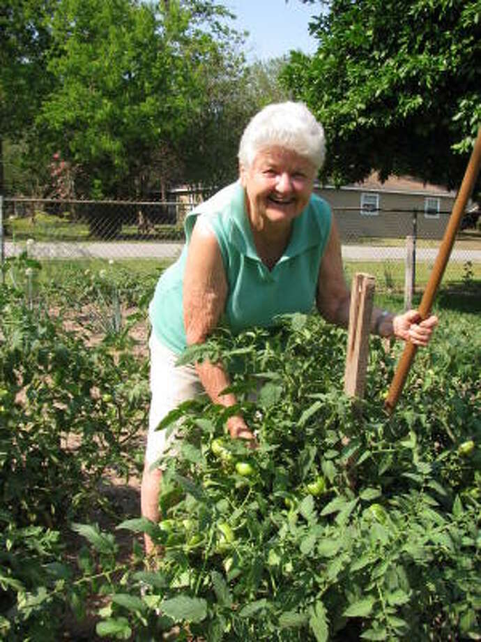 GARDEN LADY: Gertrude Kuykendall of Rosenberg works in her tomato garden, something she's done for more than five decades. Photo: Don Maines, For The Chronicle