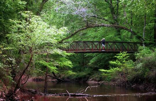 The Big Thicket National Preserve: Near Beaumont, Big Thicket National Preserve is true to its name: around 97,000 acres of heavy forest. The region is home to a wide variety of animal life and is an ideal spot for bird watchers. / Beaumont