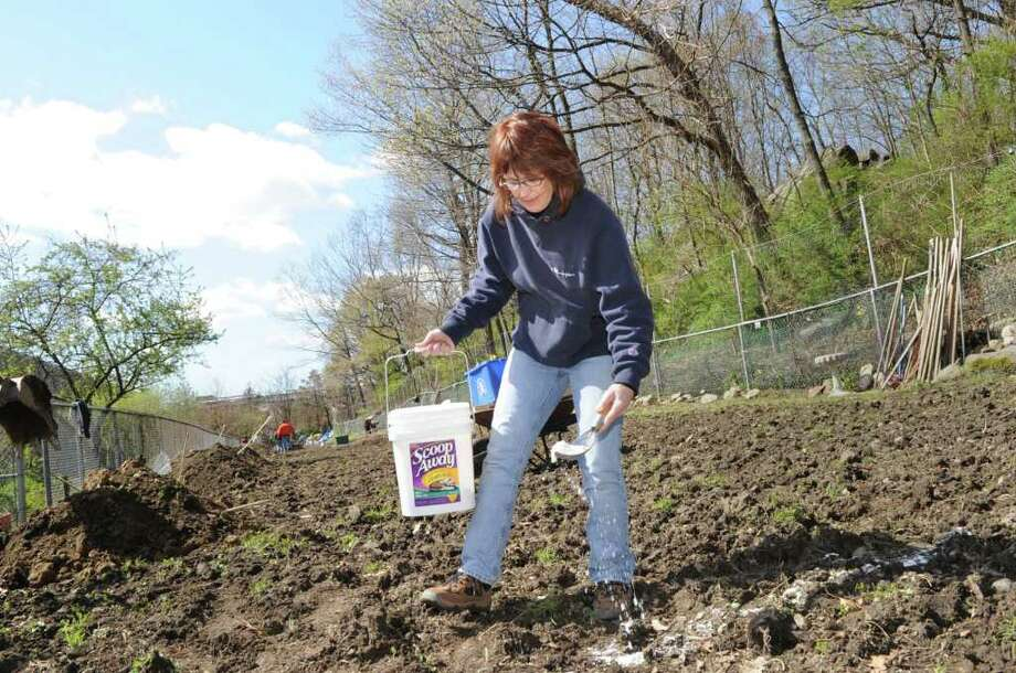 Patty Sechi, the lead organizer of the Armstrong Court Community  Garden, uses lime to mark out garden plots, as the opening of the garden got under way for its second season, April 10, 2010. Photo: File Photo / Greenwich Time File Photo