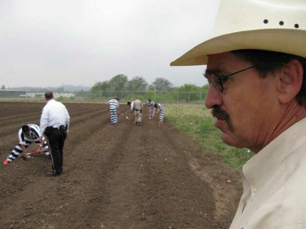 Kerr County Sheriff Rusty Hierholzer oversees inmates planting seeds for okra and other vegetables Wednesday in a new garden on the grounds of county jail in Kerrville. Zeke MacCormack / zeke@express-news.net Photo: Zeke MacCormack, Zeke MacCormack/Express-News