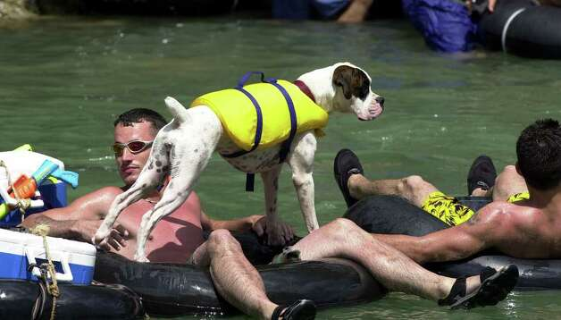 METRO   Even the dog gets in on the fun on the Guadalupe River Saturday afternoon.  She was flaoting with his owner several miles upstream from New Braunfels.  TUBING ON THE GUADALUPE RIVER.      TOM REEL/STAFF   MAY 29, 2004. Photo: TOM REEL, SAN ANTONIO EXPRESS-NEWS / SAN ANTONIO EXPRESS-NEWS