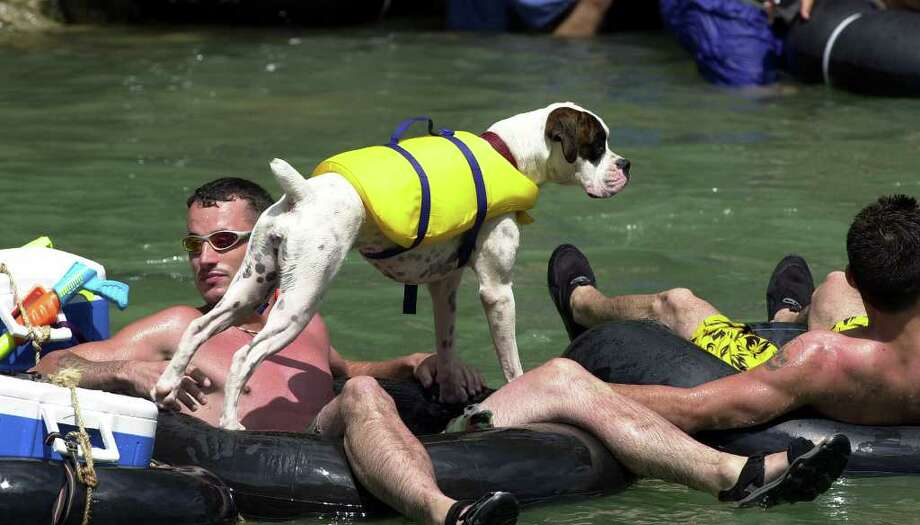 Even the dog gets in on the fun on the Guadalupe River Saturday afternoon.  She was flaoting with his owner several miles upstream from New Braunfels. TOM REEL/STAFF   MAY 29, 2004. Photo: TOM REEL, SAN ANTONIO EXPRESS-NEWS / SAN ANTONIO EXPRESS-NEWS