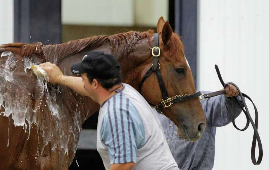 ELKTON, MD - MAY 17:  Kentucky Derby winner and Preakness entrant Animal Kingdom gets a bath after training at the Fair Hill Training Center on May 17, 2011 in Elkton, Maryland. Animal Kingdom is training for Saturday's 136th Preakness Stakes in Baltimore. (Photo by Rob Carr/Getty Images) Photo: Rob Carr