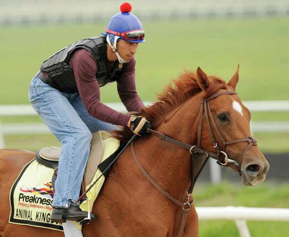 Kentucky Derby winner Animal Kingdom with David Nava aboard gets a morning workout at the Fair Hill Training Center on Monday, May 16, 2011 in Fair Hill, Md. Animal Kingdom and his trainer Graham Motion are preparing for the 136th Preakness Stakes race Saturday in Baltimore. (AP Photo/Jim Dietz) Photo: Jim Dietz