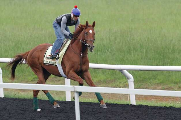 Kentucky Derby winner Animal Kingdom, ridden by David Nava, take a lap around the training track at Fair Hill Training Center in Elkton, MD., Friday, May 20, 2011. Animal Kingdom is entered in Saturday's 136th running of the Preakness Stakes.  (AP Photo/Steve Helber) Photo: Steve Helber