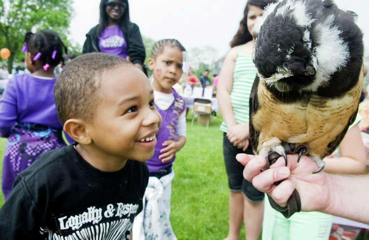 Don-Jakaree Pavia, 6, gets up close and personal with Inca, a spectacled owl from Animal Embassy, as families enjoy the 4th Annual Early Childhood Fair at Cove Island Park in Stamford, Conn. on Saturday May 21, 2011.