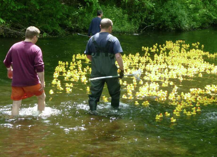 A bright yellow flock of rubber ducks heads down the Mill River on Saturday for the annual Duckie Derby benefiting St. Catherine's Academy. Photo: Contributed Photo/Mike Lauterborn, Contributed Photo / Fairfield Citizen contributed