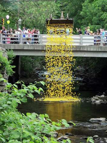 Almost 4,000 rubber ducks will be released for the Annual Newtown Lions Club Duck Race. The event is a Lion's Club fundraiser, with proceeds from donations going to various charities. The duck release is one of many attractions during a day of  entertainment and family fun. Photo: Jay Weir / The News-Times Freelance