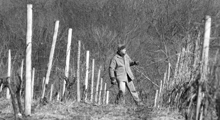 Connecticut wines are no longer something to ignore. In this file photo, Jim Baker does some winter work at Hopkins Vineyard in New Preston, where a number of delicious wines are produced, including the Lady Rose 2009, which uses Dornfelder and Lemberger grapes (with a Pinot admixture) Photo: File Photo / Greenwich Citizen
