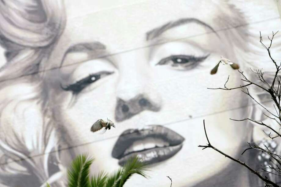 Cannes, FRANCE:  birds fly past a giant picture of Monroe in Cannes, France on May 15, 2006, two days before the Cannes film festival. Photo: VALERY HACHE, AFP/Getty Images / 2006 AFP