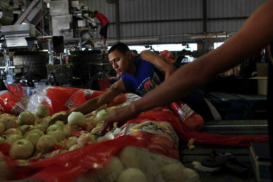 Juan Gomez bags onions imported from Mexico, bound for the East Coast, at Progreso Produce in Pharr in April. Photo: Lisa Krantz/Express-News / SAN ANTONIO EXPRESS-NEWS
