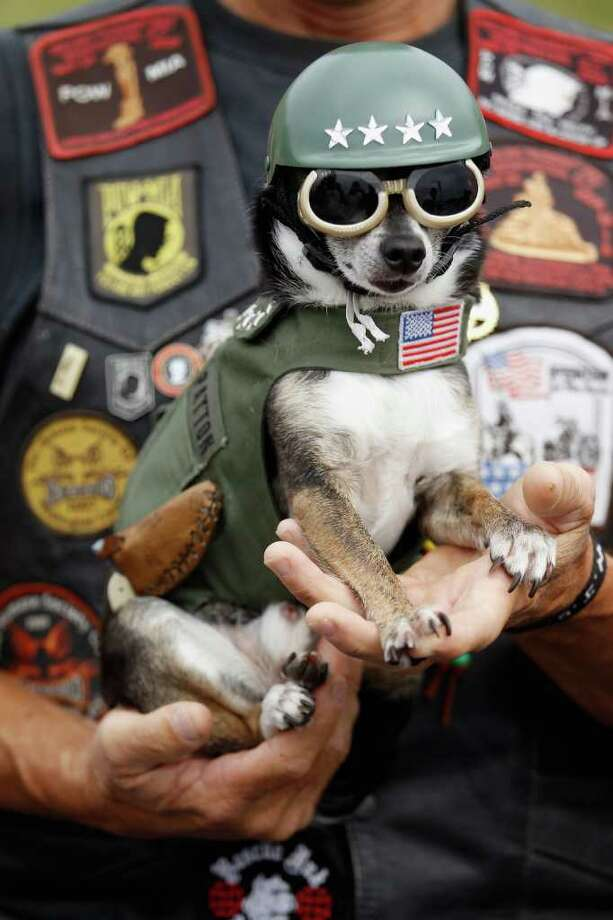 "ARLINGTON, VA - MAY 29:  Isaiah, a 10-year-old Chihuahua dressed as Gen. George Patton and owned by Buddy Sours of Browntown, Virginia, joins thousands of motorcycle enthusiasts and military veterans in the Pentagon parking lot before the start of ""Rolling Thunder"" rally May 29, 2011 in Arlington, Virginia. Isaiah has more the 45,000 miles on a motorcycle and this is his sixth year participating in Rolling Thunder. Although not an official guest, former U.S. Vice presidential candidate and Alaska governor Sarah Palin is expected to participate in today's motorcycle parade from the Pentagon to the National Mall. Photo: Chip Somodevilla, Getty Images / 2011 Getty Images"