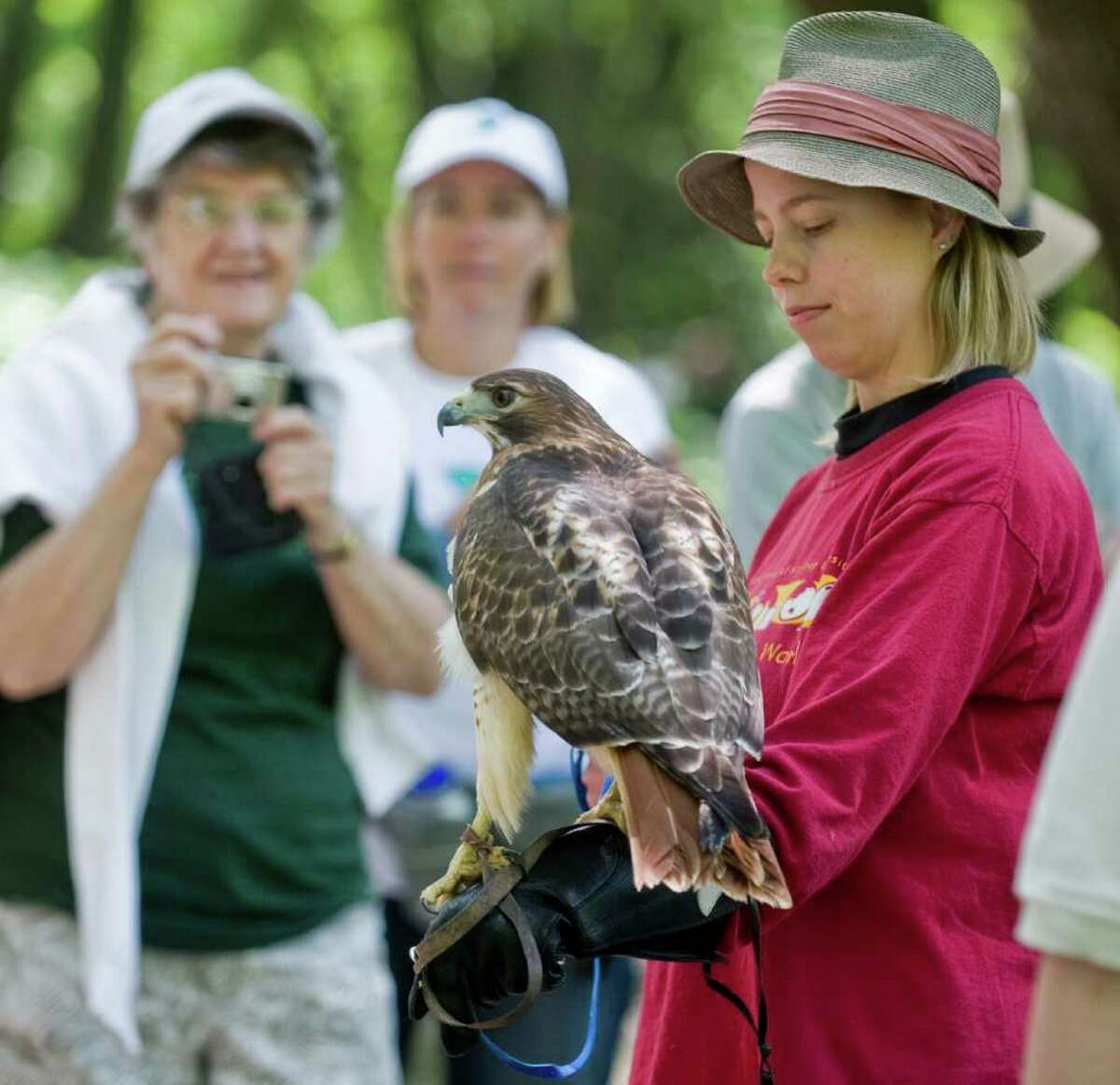 Kelley Phifer, of the Sharon Audubon Center, holds Mandy, a red-tailed hawk, at the Still River Greenway Day event on Corporate Drive in Danbury. Saturday, June 4, 2011.