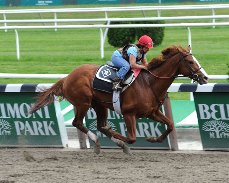 In this photo provided by the New York Racing Association, Preakness winner Shackleford works out at Belmont Park in New York, Saturday, June 4, 2011. Sahckelford's trainer announced on Saturday that he will compete in the Belmont Stakes in New York on Saturday, June 11, 2011. (AP Photo/NYRA, Adam Conglianese) Photo: Adam Conglianese