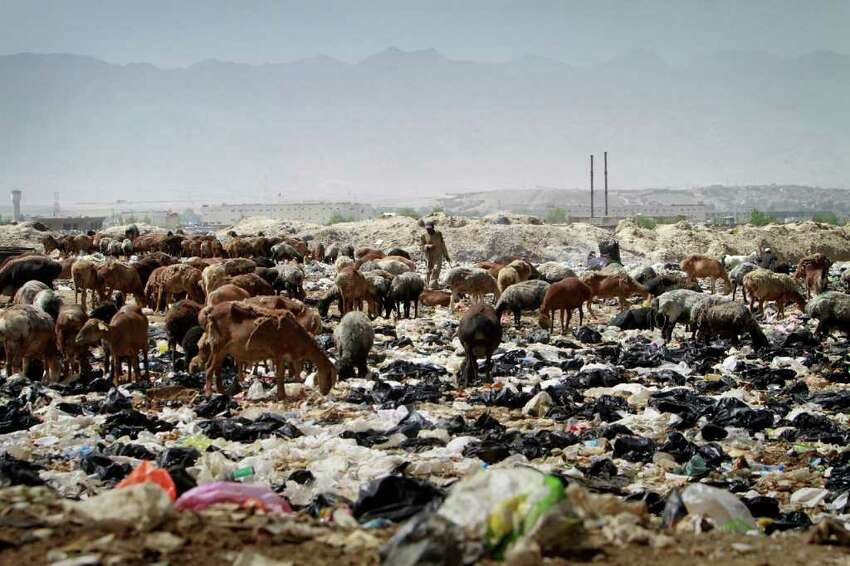 A shepherd man walks among his animals over the trashes on the World Environment Day in Kabul, Afghanistan on Sunday, June 5, 2011.