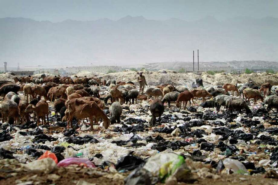 A shepherd man walks among his animals over the trashes on the World Environment Day in Kabul, Afghanistan on Sunday, June 5, 2011. Photo: Musadeq Sadeq, AP / AP