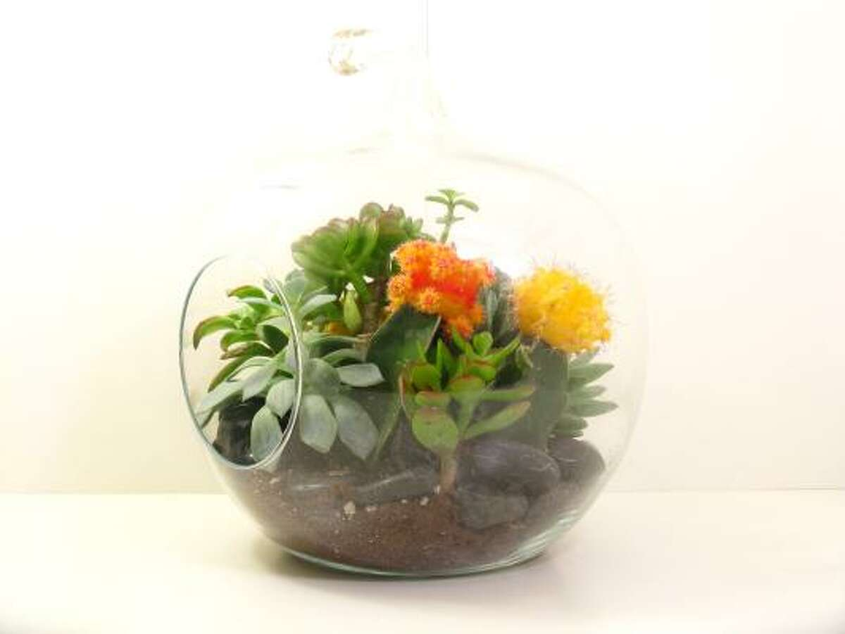 Terrariums make great centerpieces, and guests can take them home to enjoy for years.