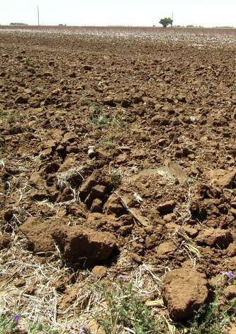 In this May 19, 2011, photo are clumps of dirt in a drought-hardened field near Lubbock, Texas. Meteorologists blame the conditions on La Nina, a cooling of the Pacific waters near the equator. It¿s caused extreme drought in Texas and parts of Oklahoma, Louisiana and New Mexico. Photo: Betsy Blaney, AP / AP