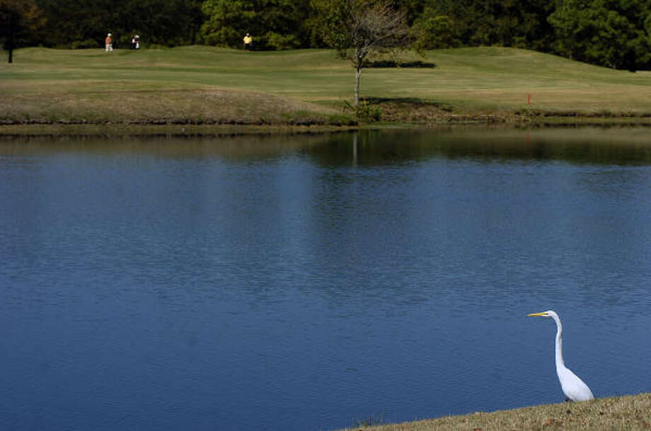 Memorial Park, a city-owned course in the heart of Houston, is known for low fees, challenging holes and lush, relaxing scenery. Photo: FILE PHOTO