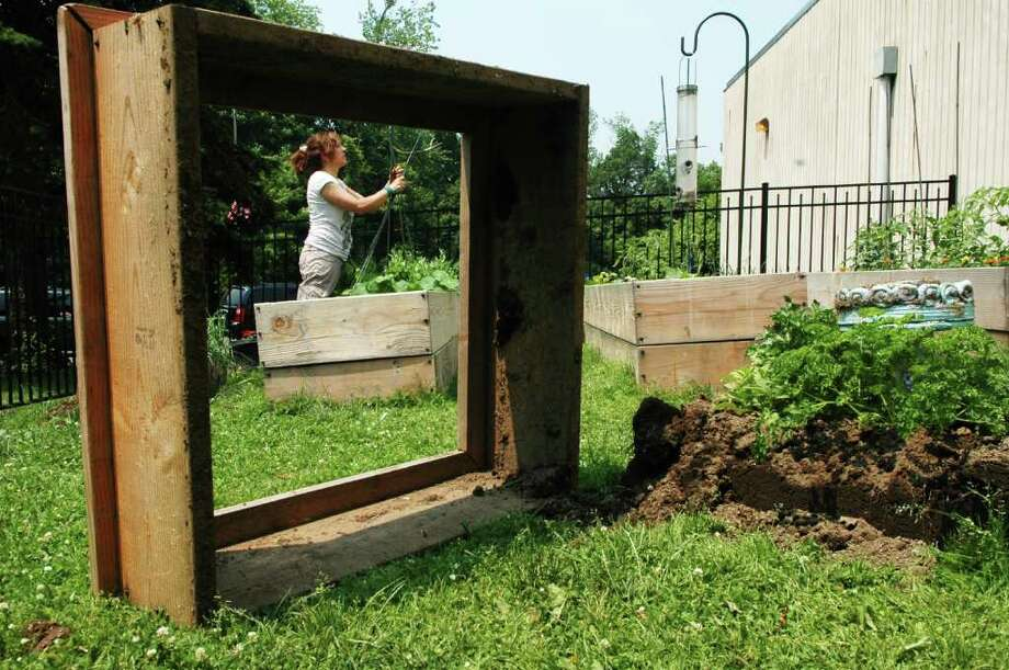 Davenport art teacher and master gardener Phyllis Lodato-Suppa ties up some of the plants at the Davenport Ridge Elementary School garden on Thursday June 9, 2011. When students and staff arrived at the Stamford, Conn. school, they discovered their outdoor garden planted for classroom study had been vandalized. Photo: Cathy Zuraw / Stamford Advocate