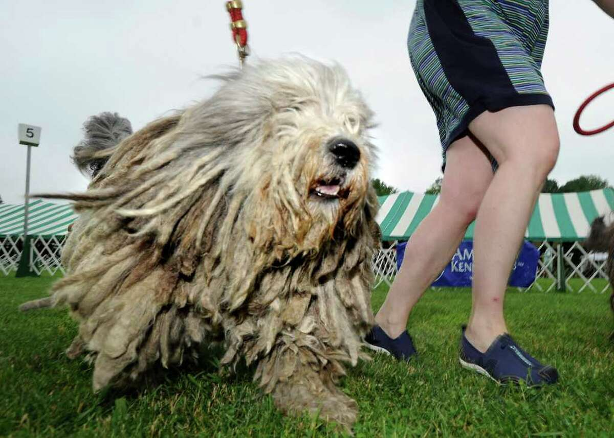 Jane Bass of Orange, Conn., runs her bergamasco, D'Artagnon, during the Greenwich Kennel Club All-Breed Dog Show at Taylor Farm Park, Norwalk, Saturday afternoon, June 11, 2011.