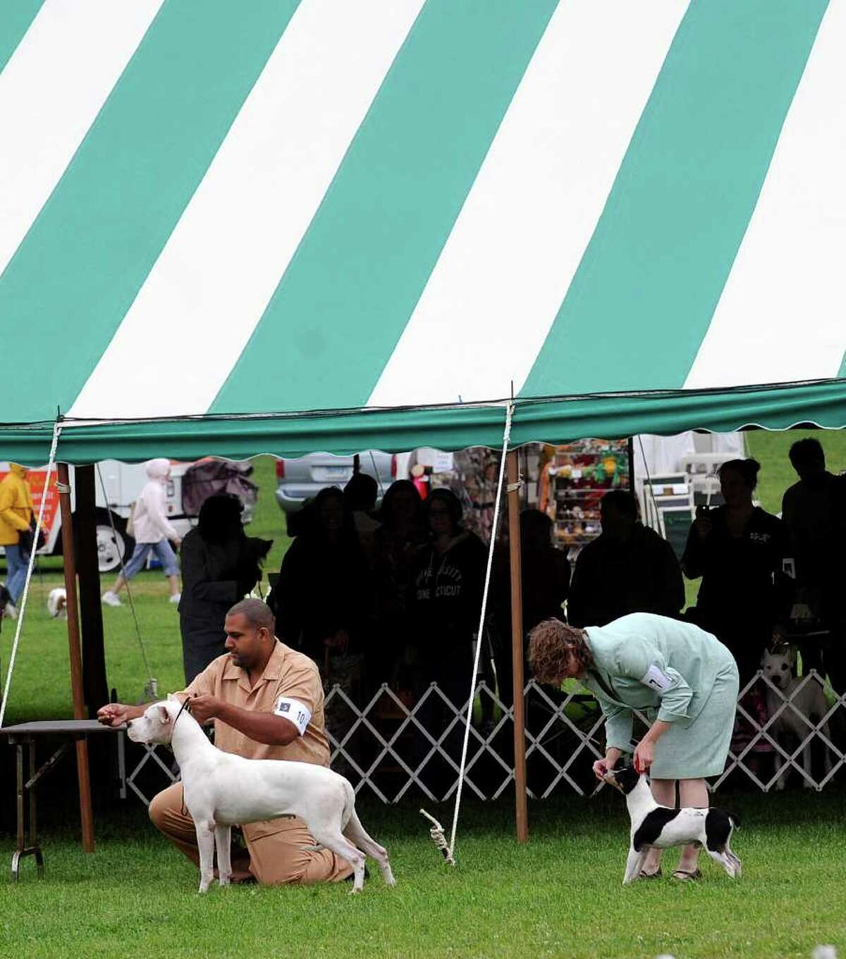 Greenwich Kennel Club All-Breed Dog Show at Taylor Farm Park, Norwalk, Saturday afternoon, June 11, 2011.