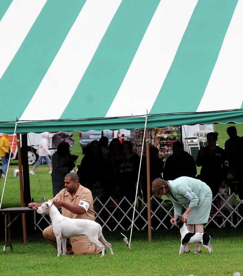 Greenwich Kennel Club All-Breed Dog Show at Taylor Farm Park, Norwalk, Saturday afternoon, June 11, 2011. Photo: Bob Luckey / Greenwich Time