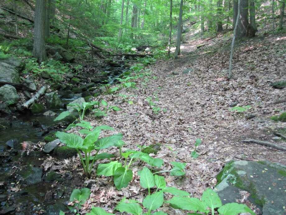 A hiking trail at Mountain Laurel offers a respite from the suburban landscape with the sounds of rushing water and bird calls and the occasional chipmunk siting. Photo: Contributed Photo