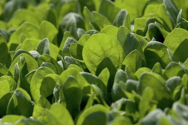 No. 5: spinach. Photo: David Paul Morris, Getty Images / 2006 Getty Images