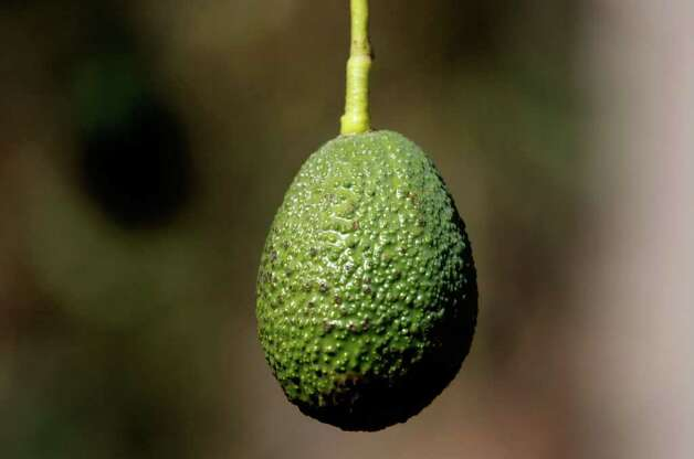 No. 4: avocado. Photo: Justin Sullivan, Getty Images / 2007 Getty Images