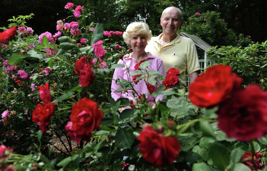 Al and Nancy Lenoce stand amongst their award-winning roses Thursday, June 16, 2011 at their home in Trumbull.  The couple and their extensive garden will be featured in Better Homes and Gardens magazine. Photo: Autumn Driscoll / Connecticut Post